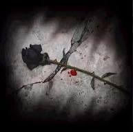 Buenos días a todos,   Hoy es San Valentín, el día de los enamorados y si estás enamorad@, que mejor regalo que mi libro de poemas,  UNA VIDA Y UN AMOR @kokoroalma