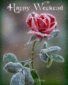 Have a Great Weekend Happy Weekend Pictures, Happy Weekend Quotes, Happy Saturday, Weekend Gif, Bon Weekend, Nice Weekend, Beautiful Love Pictures, Beautiful Gif, Good Morning Gif