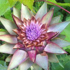 radici, foglie, fiori e frutti di un orto spettinato2016