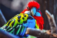 19 of the World's Most Colorful Birds | Nature - BabaMail