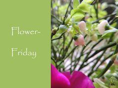 Flower-Friday, Annemonen, Heidelbeerkraut