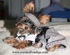 Disfraces para perros y perros disfrazados