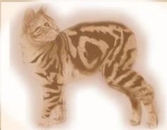 Interesting article on Cabbits aka Manx cat.