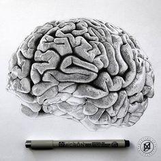 """The Brain"" 100% stippling, 16 hours of work, on A4 Bristol Board  #brain #art #details #anatomy #illustration #draw #drawing #dotwork #dot #stipple #stippling #pointillism #pencil #iblackwork #worldofartists #nawden #arts #art_collective #artists_rescue #art_sanity #justarts #artistic_unity_ #artfido #blackandgrey #worldofpencils #supportart #sssartists #art_assist #artistic_nation #triplesartists"