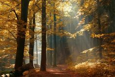 Sunbeams on Footpath through Autumn Forest with Leafs Changing Color royalty-free stock photo Wallpaper Paisajes, The Road Not Taken, Autumn Forest, Forest Light, Magic Forest, Deep Forest, Walk In The Woods, Fall Photos, Nature Wallpaper