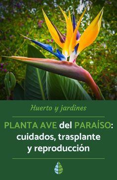 Tire Garden, Garden Yard Ideas, Garden Projects, Garden Tools, Mini Plants, Cactus Plants, Balinese Garden, Best Roses, Conservatory Garden