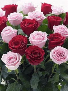 Only share the beautiful roses. Flowers Gif, All Flowers, My Flower, Pretty Flowers, Flower Power, Wedding Flowers, Roses Gif, Good Morning Flowers, Good Morning Images
