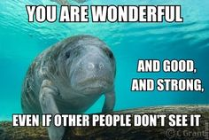 Thank you, calming manatee!