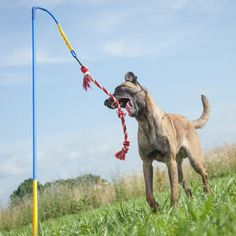 The Tether Tug XL is an interactive toy designed to keep your dog healthy, happy, and entertained.