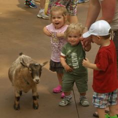 Zoo Troop for toddlers