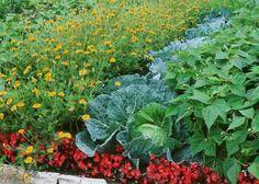 Associer les plantes entre elles association permet de gagner de la place