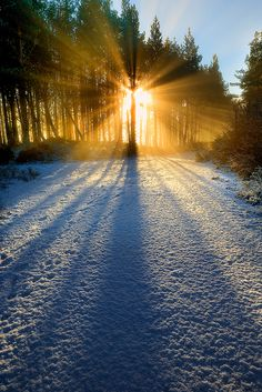 Snow and Glow, Abernethy Forest, Cairngorms, Scotland, by midlander1231 on Flickr.