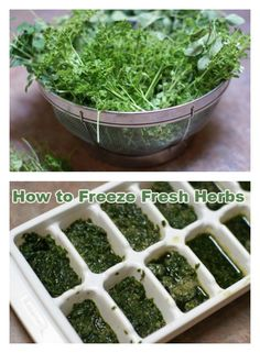 Kitchen Tutorial: How to Freeze Fresh Herbs | 5DollarDinners.com