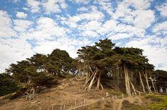 Baker Beach San Francisco by HeatherWarwick on Etsy