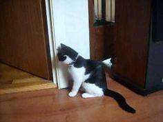 Random #70 Random, Cats, Youtube, Animals, Gatos, Animales, Animaux, Animal, Cat