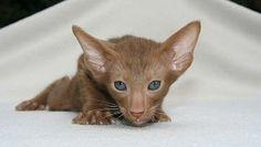 Kitten, Cat Baby, Young Animal
