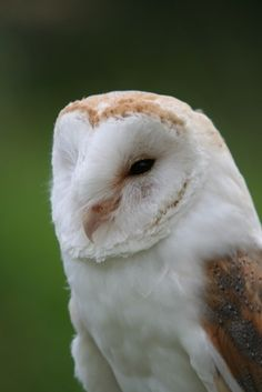 How To Build A Barn Owl House