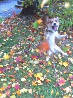 The Leaf Lover | Why it matters Shortly after this photo was taken, this pooch was inspired to invent the Pumpkin Spice Latte. He now lives a lavish lifestyle in the hills of Los Angeles, where there is no fall.