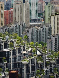 'Forest City' under construction with old buildings in the background Shanghai. - Architecture and Urban Living - Modern and Historical Buildings - City Planning - Travel Photography Destinations - Amazing Beautiful Places Types Of Granite, Singapore Changi Airport, Thomas Heatherwick, Floating Garden, Forest City, Large Planters, Different Plants, Latest Images, Old Buildings