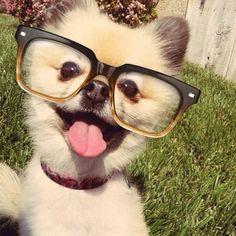 Warby Parker frames on a pomeranian! Cute
