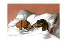 Happy Dachshund Couple (Delightful Dogs Animals Art Prints)