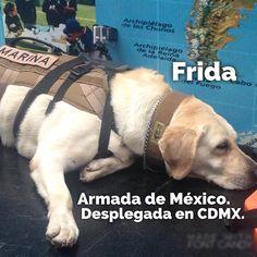 Este es el álbum con todos los perritos que sacaron la garra por México