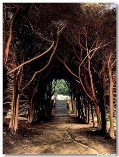 Jardins Palácio Mateus | Vila Real #Portugal #Portoholidays | Visit: http://www.the-yeatman-hotel.com/en/packages-programmes/