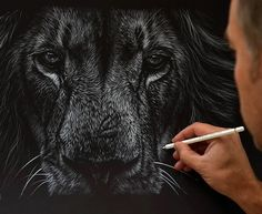 Incredible White Pencil On Black Paper Works By Richard Symonds - Stunning drawings of endangered wild animals by richard symonds