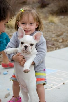 French Bulldog getting help from a friend