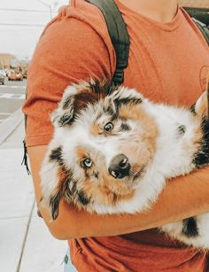 Pintrest:♡Medhya♡ Super Cute Puppies, Baby Animals Super Cute, Cute Baby Dogs, Cute Little Puppies, Cute Dogs And Puppies, Cute Little Animals, Cute Funny Animals, Doggies, Baby Animals Pictures