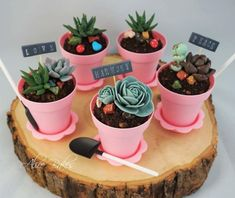 Succulent Pot Cupcakes by Alice Bakes Sg