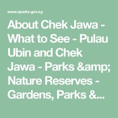 About Chek Jawa - What to See - Pulau Ubin and Chek Jawa - Parks & Nature Reserves - Gardens, Parks & Nature - National Parks Board