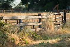 Rural Fencing Options  |  nadeenflynn.com  |