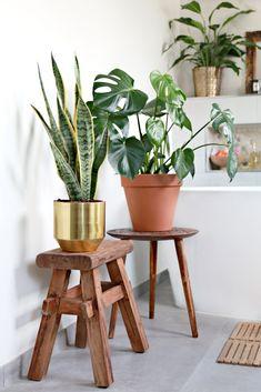 BADKAMER PLANTS - planten in de badkamer bij blogger Serena Verbon door Van Manen Badkamers te Barneveld
