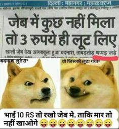 Funny Dog Picture – Download Funny Jokes – Funny Hindi Jokes – Funny Jokes in Hindi