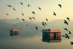 Mystic Morning - Jal Mahal