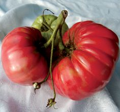 Soldacki Tomato- another must have tomato!