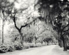 Fine Art Photography Blog of Irene Suchocki: Southern Gothic