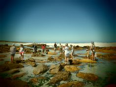 Coastal Foraging course dates – Summer Rock Pools, Cape Town, Summer 2014, Coastal, Dolores Park, Dating, Beach, Travel, Natural Swimming Pools