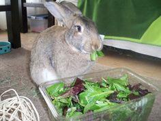 Rabbit Rescue Ottawa Ontario Canada - New Moon Rabbit Rescue