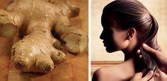 Mejora la calidad del cabello con jengibre
