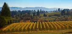 Join us November 23-25, 2012 for the 30th annual #Oregon #Wine Country Thanksgiving event. This wine country tradition will kick off winter wine tasting and the holiday season with an unforgettable weekend!    More than 160 wineries and tasting rooms in the #WillametteValley will open their doors for special tastings and holiday festivities. Enjoy this unique opportunity to visit some of the region's small, family-owned wineries only open to the public on select holiday weekends…