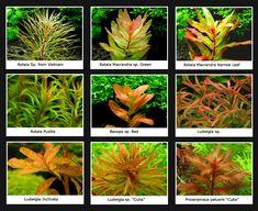 Yellow-&-Orange-Plants