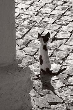 black an white kitty