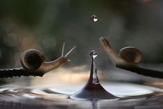 Magical Macro World Of Snails And Bugs By Vadim Trunov | Bored Panda