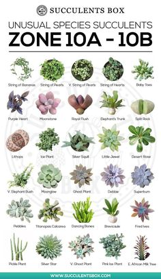 Types of Succulents for Zone can find Planting succulents and more on our website.Types of Succulents for Zone 10 Succulent Gardening, Planting Succulents, Garden Plants, House Plants, Planting Flowers, Succulent Plants, Propagate Succulents, Vegetable Garden, Succulents Painting