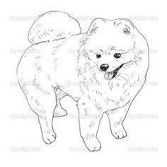 Pomeranian Coloring Pages Bing Images