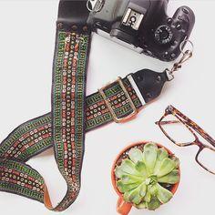 Vintage camera strap & succulent.