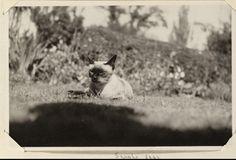 Sappho, the Woolfs' cat. Monk's House garden