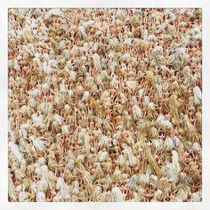 Wave of Barbies. #barbie #doll #wave #sculptures #sculpturesbythesea #sculpturesbythesea2015 #barbies #figure #bondi #bondibeach #bonditobronte #art #sculpture #culture #sydney #nsw #australia #instadaily #instagood #picoftheday #picture by laura_inthesky http://ift.tt/1KBxVYg